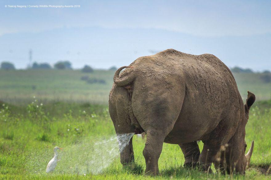 عکس منظره و حیوانات