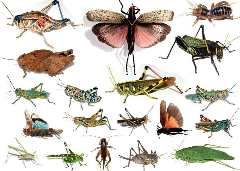 готовят картинки много насекомых на одном листе удачи для