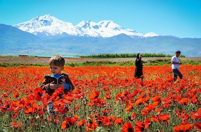 عکس منظره گلستان