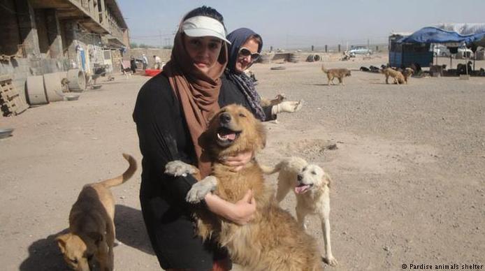 عکس سگ ایرانی