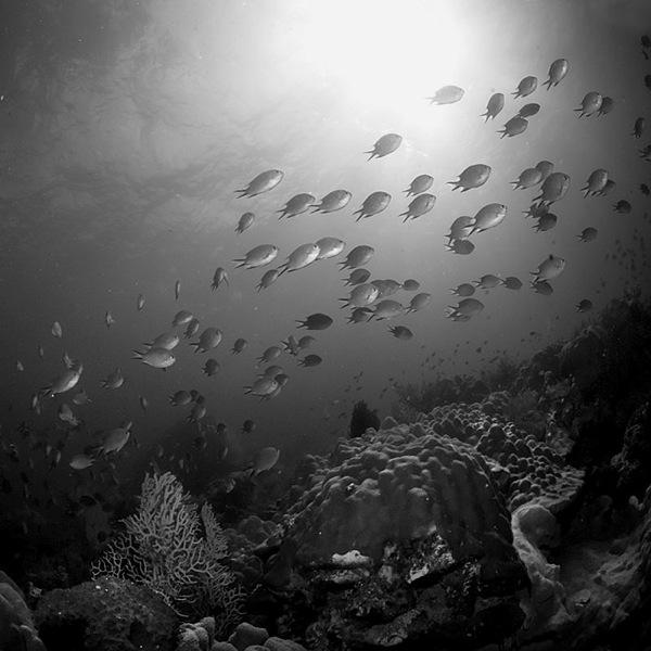 عکس+سیاه+سفید+نقاشی