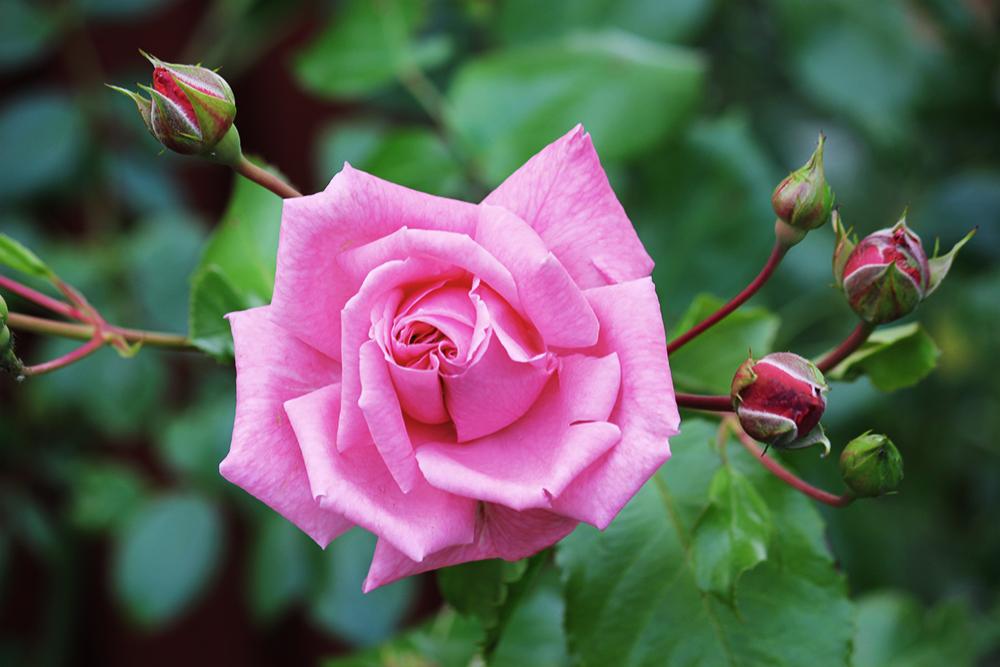 عكس متحرك از گل و دسته گلهای زیبا   جذاب