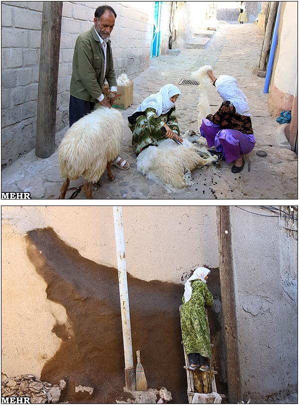 عکس رنگی از رحم در شیراز