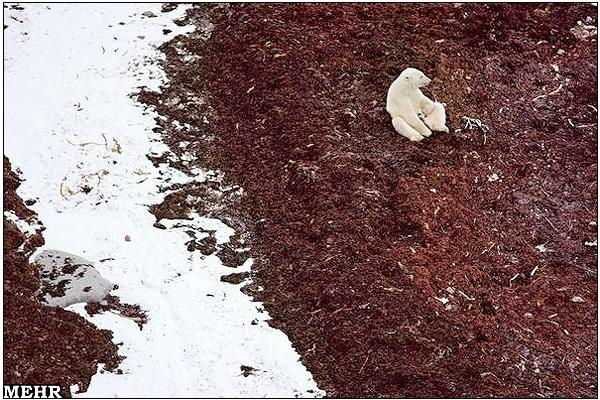 رنگ یخی قطبی عکس / چشم اندازی دیدنی از قطب شمال که هرگز ندیده اید!